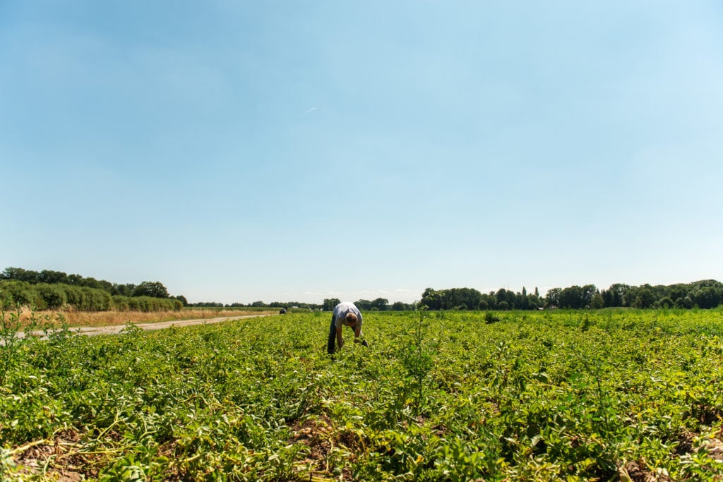 Ralf auf dem Kartoffelfeld