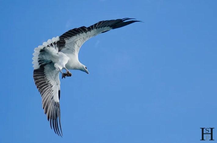 20120507-161626-Australien, Segeln, Weltreise, Whitsunday Islands-20120507-161626-Australien-Segeln-Whitsunday-Islands_DSC0385