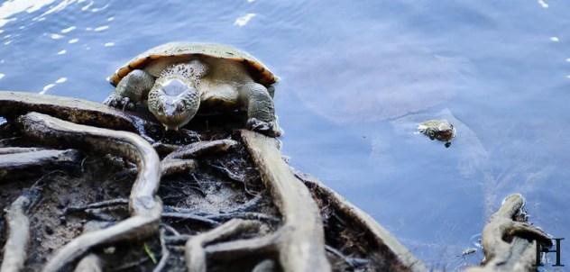 20120514-121133-Australien, Mena Creek, Paronella Park, Weltreise-20120514-121133-Australien-Mena-Creek-Paronella-Park_DSC1553