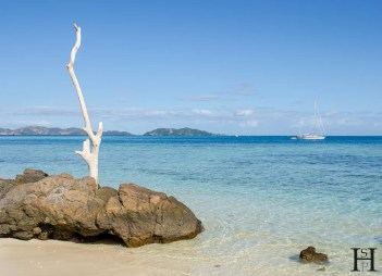 20120715-145702-Baumstumpf, Fidschi, Inselrundgang, Mana Island, Weltreise-_DSC9881