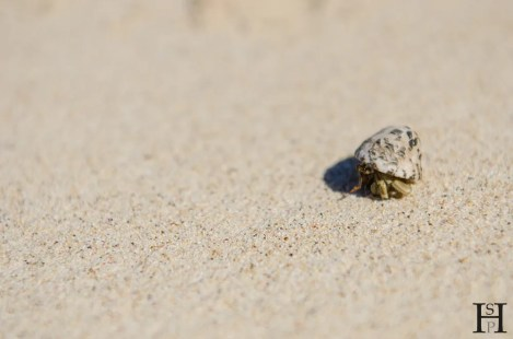 20120716-104140-Einsiedlerkrebs, Fidschi, Inselrundgang, Mana Island, Strand, Weltreise-_DSC9887