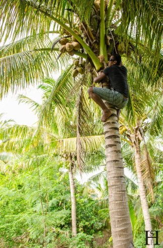 20120721-100428-Fidschi, Kokosnuss, Mana Island, Palme, Weltreise-_DSC0013