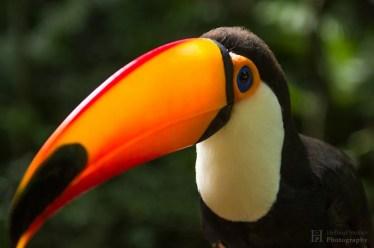 20121130-150841-Brasilien, Foz de Iguacú, Iguazú, Vogelpark, Weltreise-_DSC3896