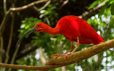 20121130-151010-Brasilien, Foz de Iguacú, Iguazú, Vogelpark, Weltreise-_DSC3904