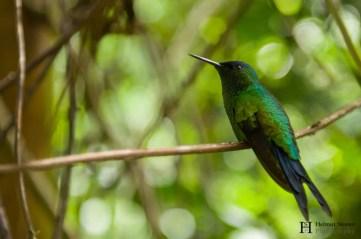 20121130-153344-Brasilien, Foz de Iguacú, Iguazú, Vogelpark, Weltreise-_DSC3944