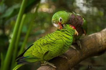 20121130-153931-Brasilien, Foz de Iguacú, Iguazú, Vogelpark, Weltreise-_DSC3959