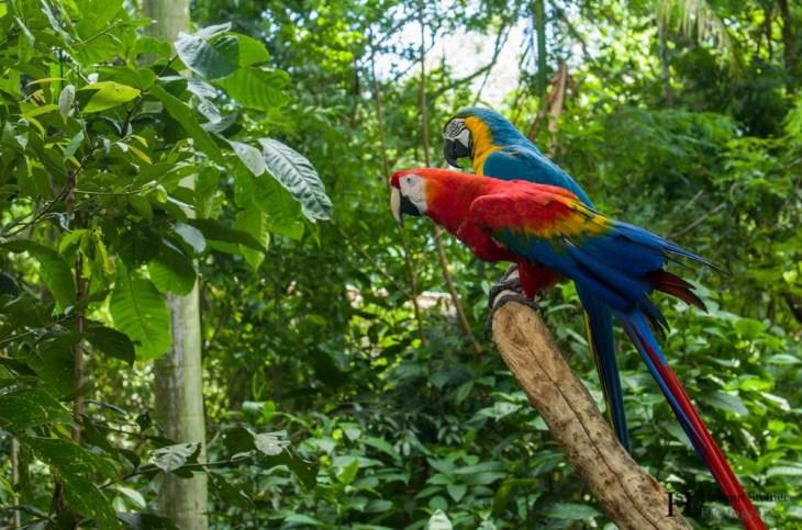 20121130-154132-Brasilien, Foz de Iguacú, Iguazú, Vogelpark, Weltreise-_DSC3972