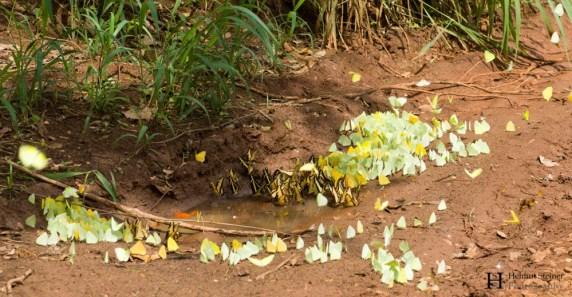 20121201-144739-Argentinien, Iguazú, Puerto Iguazú, Wasserfall, Weltreise-_DSC4350