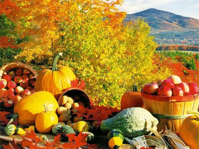 fall-harvest.jpg (640×480)