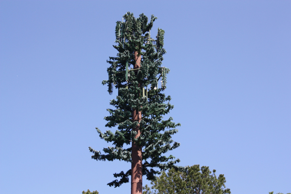 That S No Tree That S A Cell Tower History Sidebar