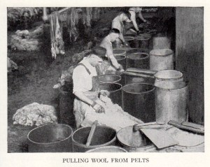 Wool pulling. Credit: Rudolf A. Clemen, By-Products in the Packing Industry (1927).