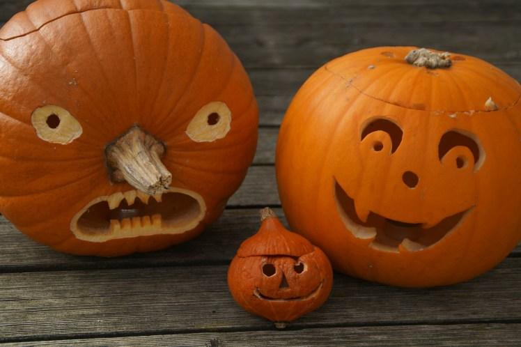 pumpkins-512109_1920