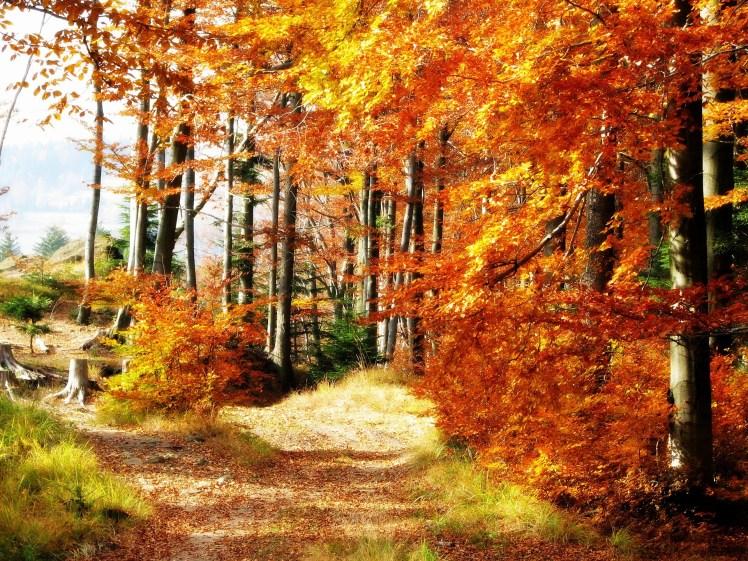 Bild von einem farbenfrohen Wald im Herbst
