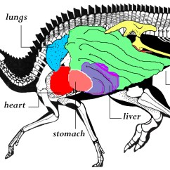 Bird Of Internal Organ Diagram Fence Geology Your Dino Mummy Questions Answered Beyondbones