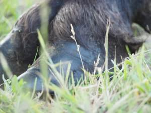 Hof Barslund, Hofhuhn, Agrarblogger, Bauernhof, Nachhaltig, Bio, Konventionell, #landwirtschaftin60sekunden