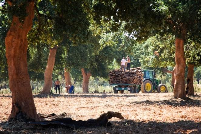 Cork Harvest 9