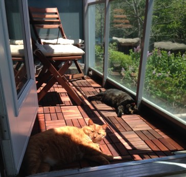 Cats living the good life.