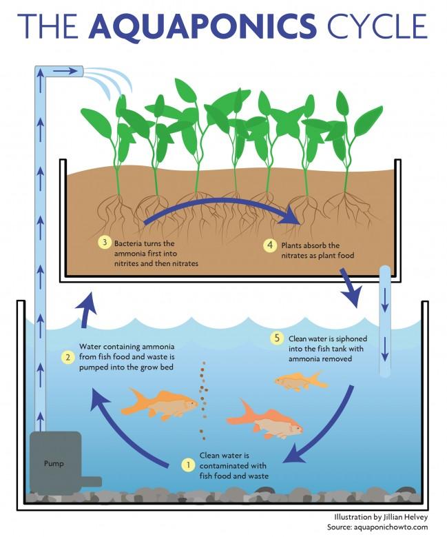aquaponics-diagram.jpg