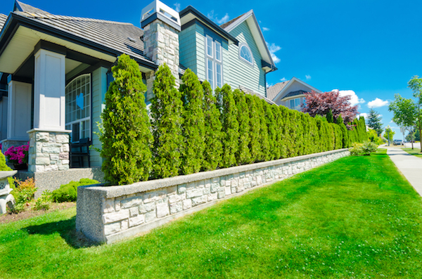 increase home's privacy plant trees and shrubs