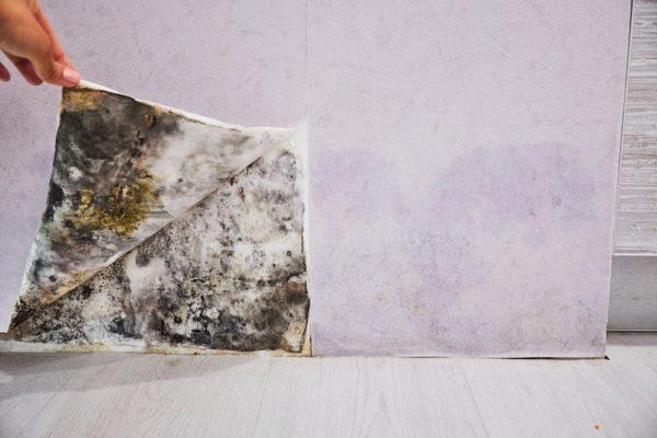 hidden mold found in home