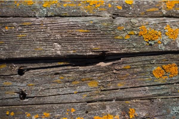 rotting deck board