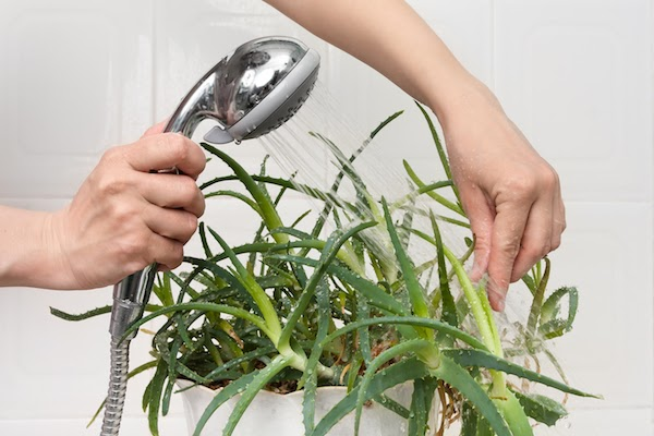 person spraying houseplant