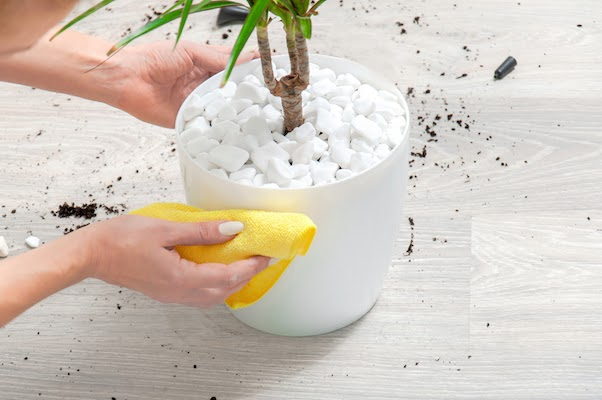 person wiping plant pot clean