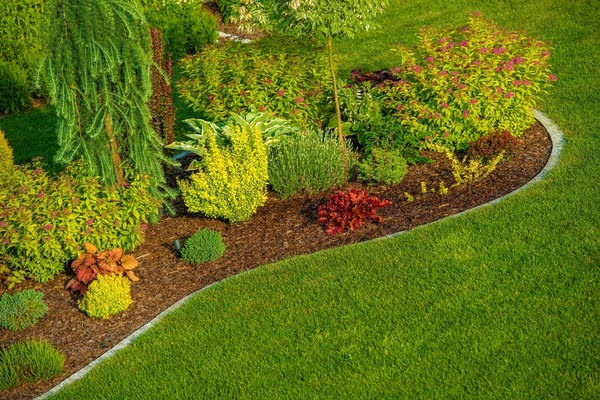 clean landscaping backyard