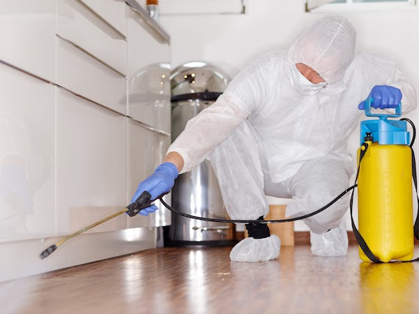 pest removal specialist spraying for bugs