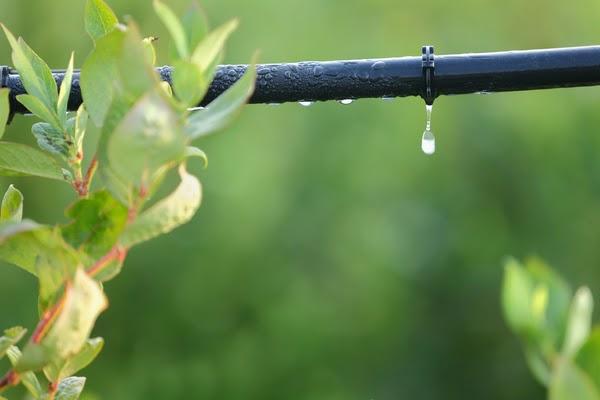 close up irrigation system