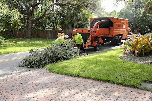 tree services company at home