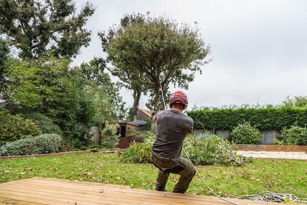 arborist pulling down tree