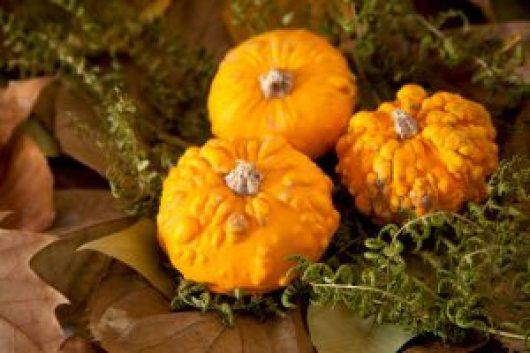 44907620 - pumpkins and leaves