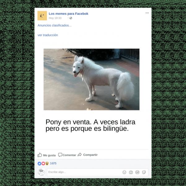 Memes para Facebook de Animals