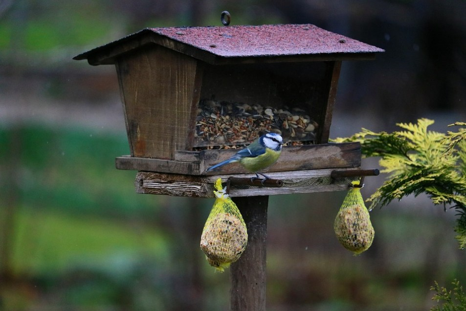 Wild birds eating from bird table
