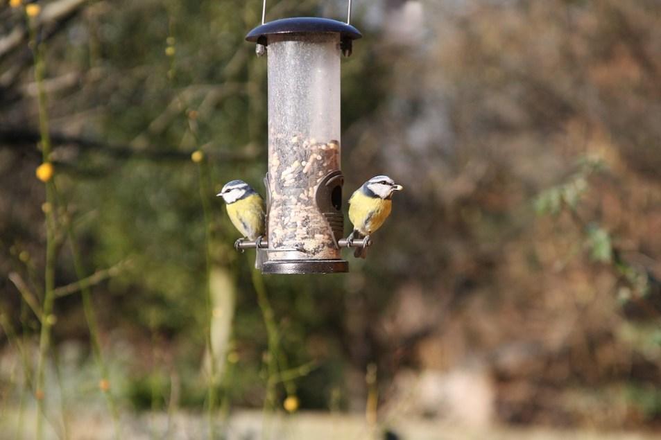 Wild birds on bird feeder