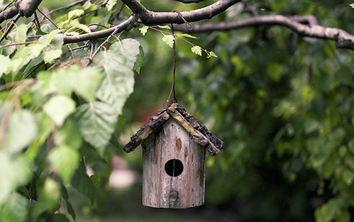 Bird house during nesting season.