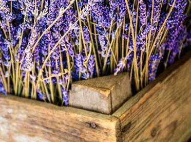 Fresh lavender in a basket.