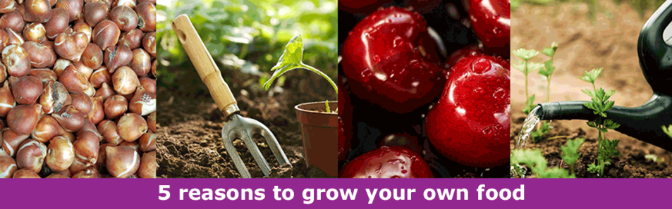 Growing your own