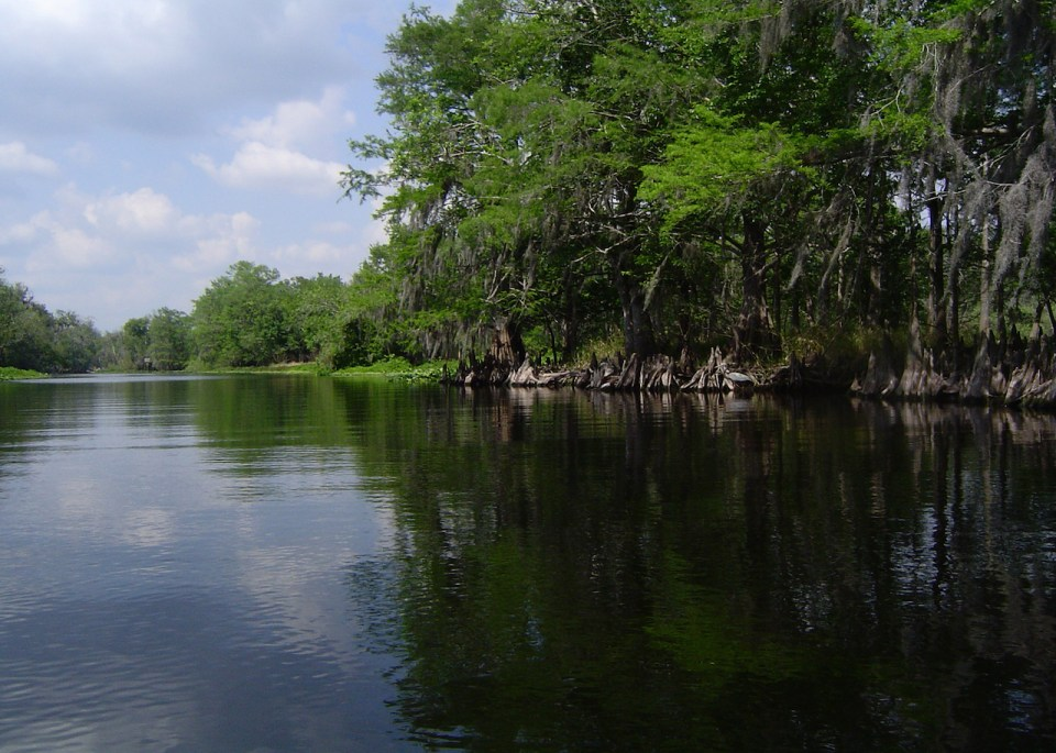 Wekiva river with shore line trees and reflections