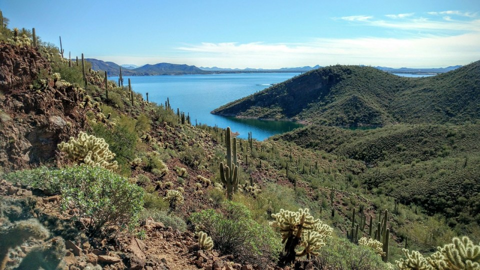 Trees and cactus in Arizona with view of Lake Pleasant in the background