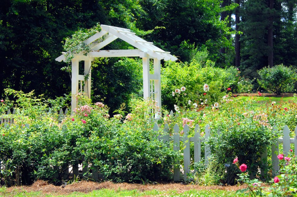 Gardens of the American Rose Center in Shreveport Louisiana has beautiful landscaping with this white wooden pavillion and white picket fence. Hollyhocks and roses bloom together around fence.