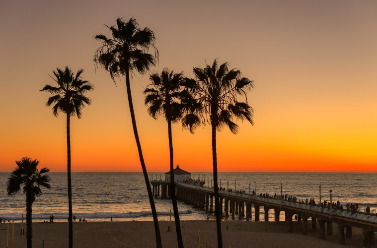 Palm trees on the beach with the sunset