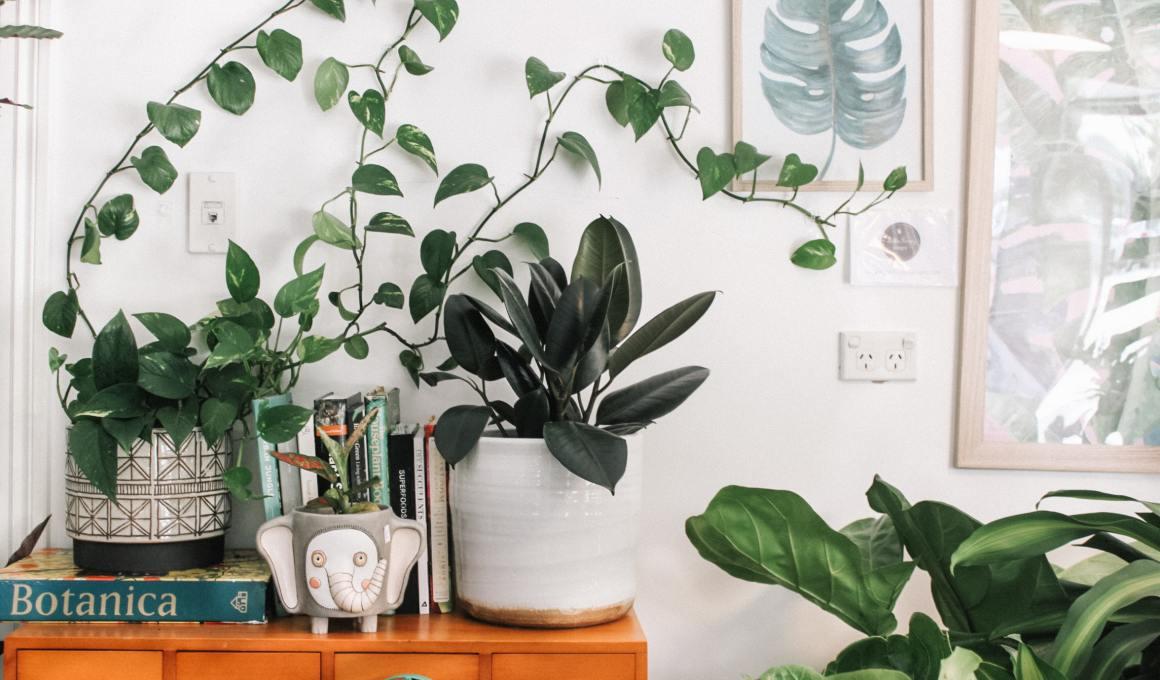 Plantas que oxigenan tu hogar