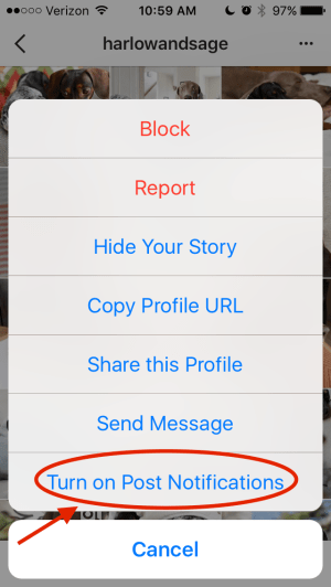 Turn on notifications.png