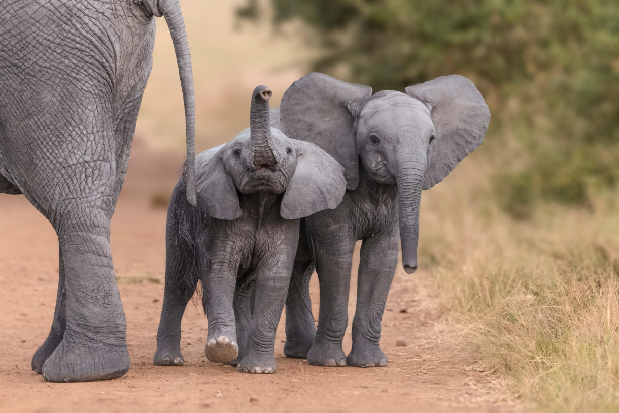 Image result for baby elephants