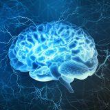 拡大ポリヴェーガル理論と脳科学