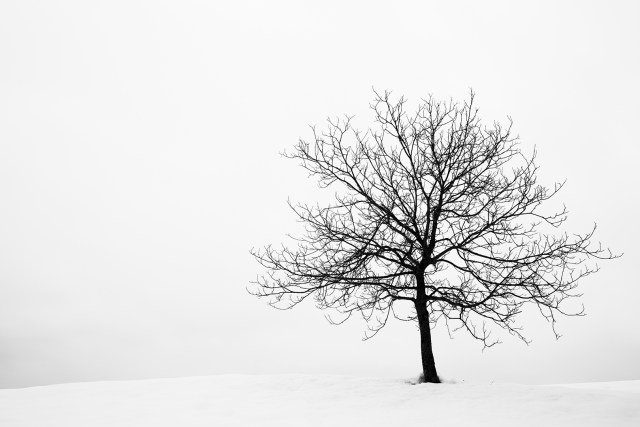 Lone tree on a snow covered hill in Volavlje in the Jance hills to the east of Ljubljana, Slovenia.