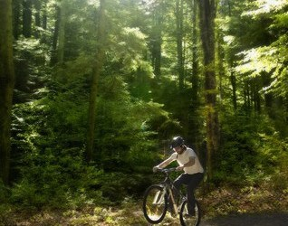 Recharge.green: What's a forest worth?