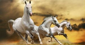Country-of-White-Horsess